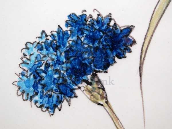 RH20-5 Veldbloemen