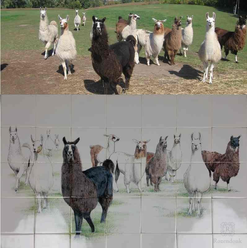 Lama's op Friese witjes