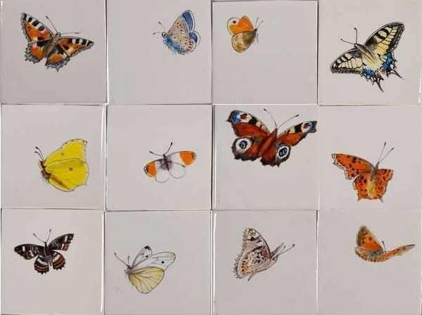 RH1-40k Grote vlinders