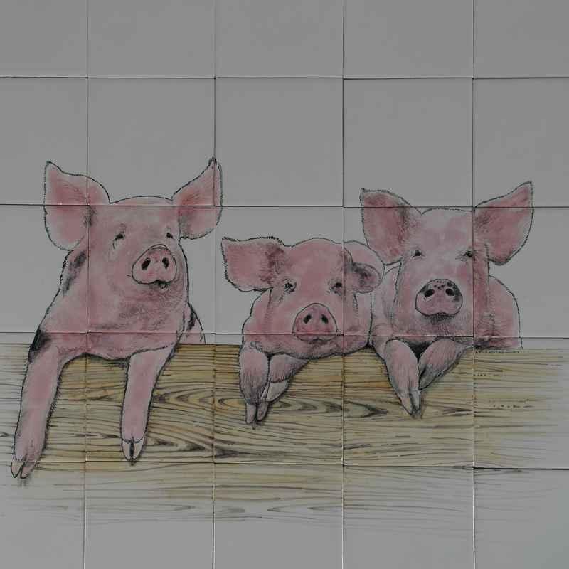 RH20-6 Nieuwsgierige varkens